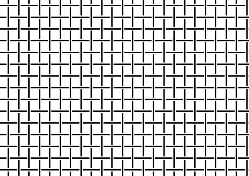 reti Stop Drosophila Normal disegno - Artes Politecnica